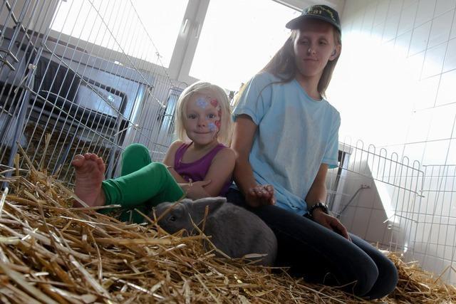 Kleintierzuchtverein March und Holzhuasen zeigt mehr als 100 Tiere