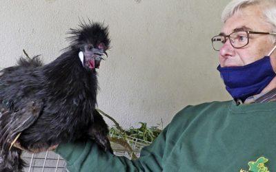 Verzicht auf den üblichen Streichelzoo, Marcher Kleintierzüchter präsentieren ihre Tiere coronakonform.